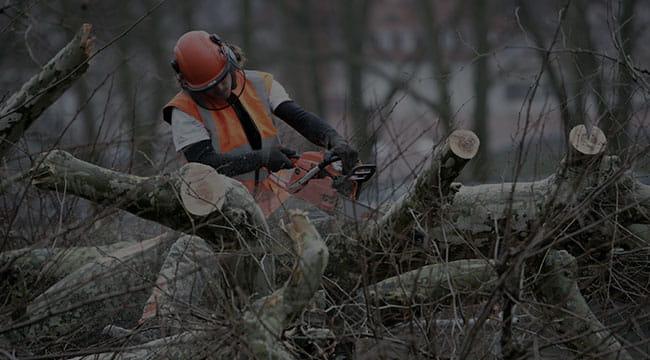 Clear Lake Tree Service